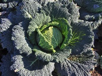 高原野菜の収穫スタッフ大募集!今年の夏は農業をやろう!