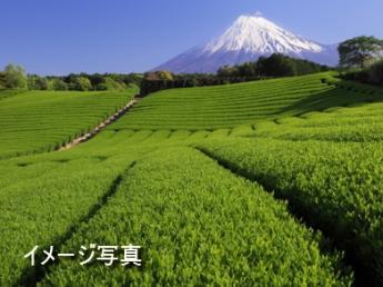 〇×製茶園