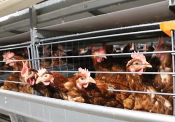 養鶏エッグ株式会社